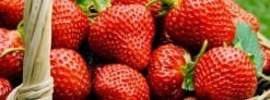 Strawberry Festival Youth Fundraiser June 10th
