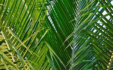 Service of Worship and Livestream for March 28th, 2021 – Palm Sunday